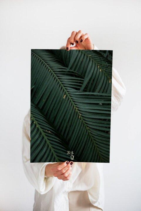 plakát palma kytka