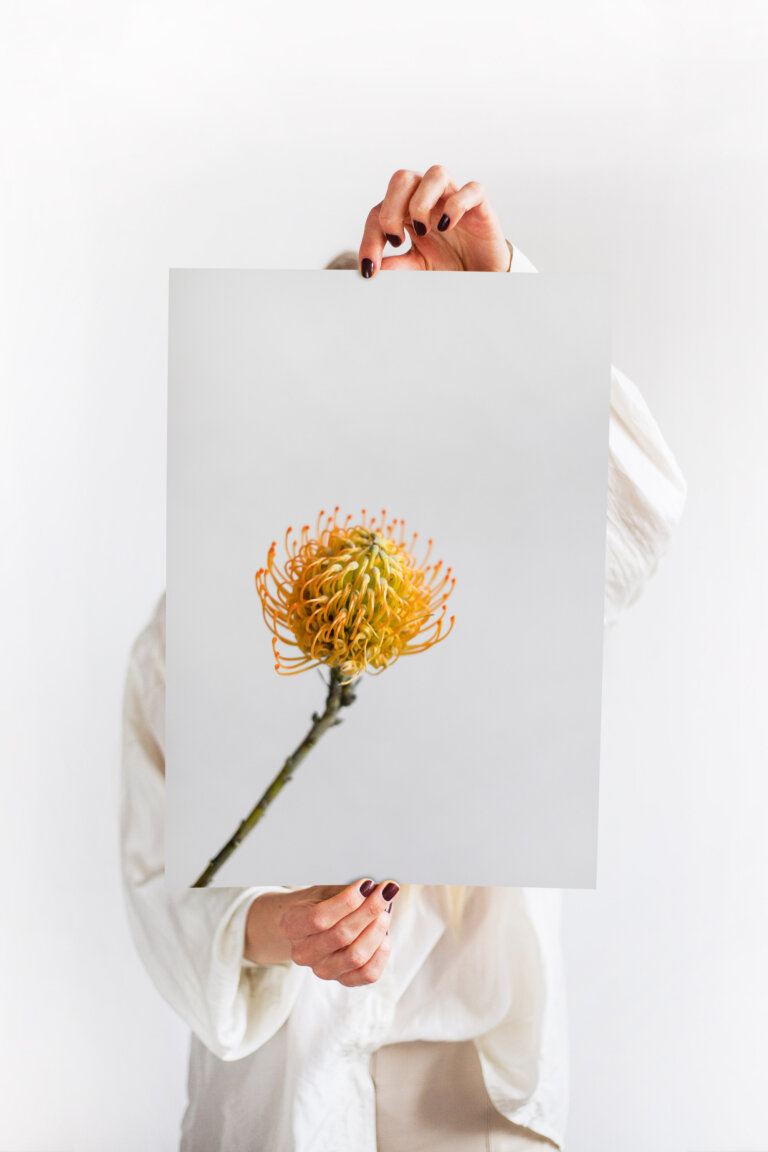 minimalistický plakát bělosemenka