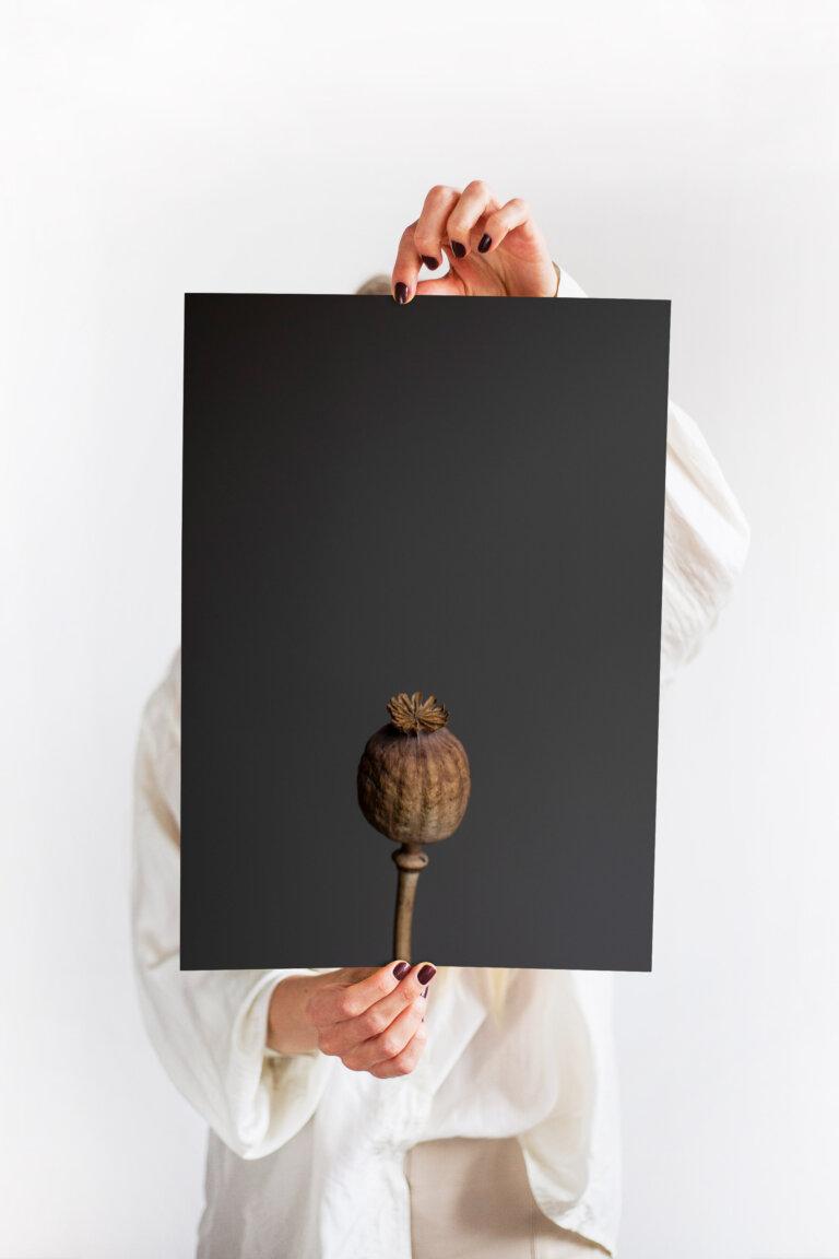 minimalistický plakát makovice