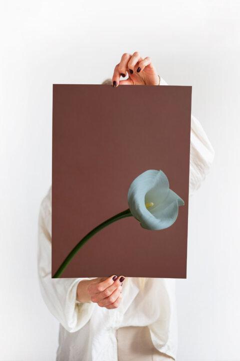 minimalistický plakát kytka